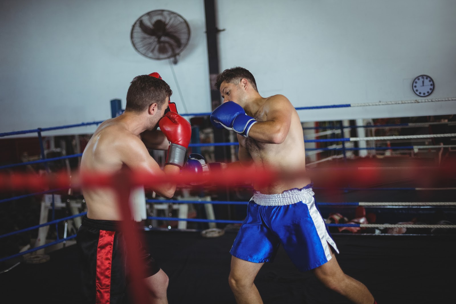 Two male fighters in action sparring in the ring with boxer in blue doing a body shot.
